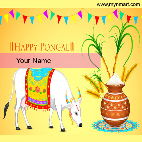Happy Pongal with Cow